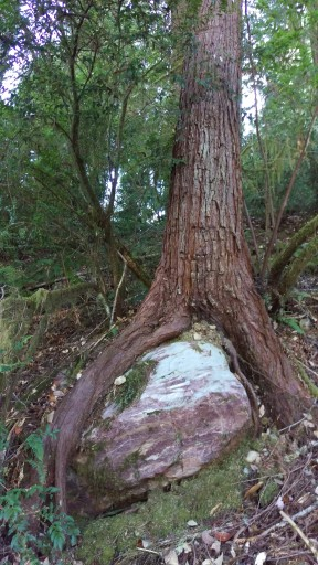 Jedediah Smith Redwoods State Park Crescent City