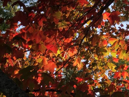 Barnes County Park - Eastport, Michigan US | ParkAdvisor
